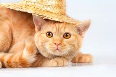 Tragender Strohhut des Kätzchens Stockbilder