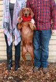 Tragendes Plaid und Stiefel der jungen Paare machen ein Feiertagsfoto mit ihrem roten Knochenwaschbärhund in einem roten Schal dr lizenzfreie stockfotografie