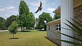 Trago de granero que hace una exhibición de vuelo Fotos de archivo