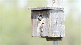 Tragos de árbol en nidal almacen de metraje de vídeo