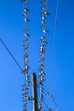 Tragos en un alambre Foto de archivo
