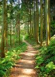 Trail stock photo