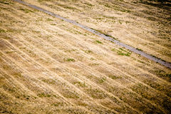 Trail. Trail path in a yellow field Royalty Free Stock Photography