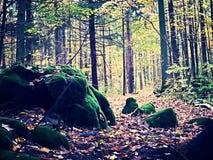 trail Arkivbilder