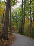 Trail. Trees and trail royalty free stock photography