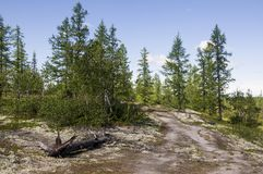 Trail across green forest with pines, spruces, larches and birches. Path, way, track, walk ... Bright summer day with blue sky. Tr. Avel stock photography