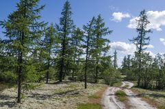 Trail across green forest with pines, spruces, larches and birches. Path, way, track, walk ... Bright summer day with blue sky. Tr. Avel royalty free stock images