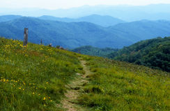 Trail across Max Patch Bald in spring. Stock Photos