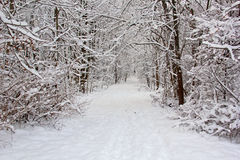 Free Trail After Fresh Snow Royalty Free Stock Photography - 36236317