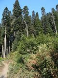 Trail along a forested ridge Stock Photography