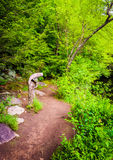 Trail along the Lehigh River in Lehigh Gorge State Park, Pennsyl Stock Photos