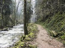 A trail in the forest during a wet day. A trail along a river in the forest during a foggy and wet day of winter, Vosges, France Stock Image