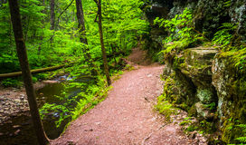 Trail along a stream at Ricketts Glen State Park, Pennsylvania. Royalty Free Stock Photos