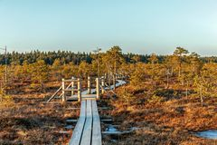 Trail along the wooden walkways through moorland in Kemeri National park, Jurmala. Natural background with nature of Latvia, stock image