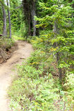 Trail through alpine forest Royalty Free Stock Photo