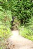 Trail through alpine forest Royalty Free Stock Photos
