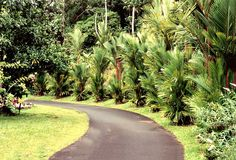 Tropical Trail stock photography