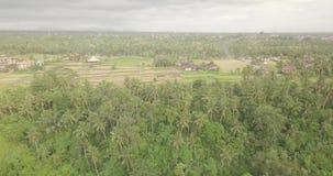 Trail artist Bali, Indonesia. 4k video stock video
