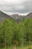 Trail Into Aspen Copse Stock Photos