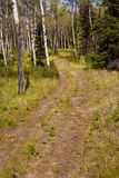 Trail in aspen forest Stock Photos