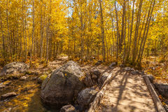 Trail in Aspens in Autumn Royalty Free Stock Photo