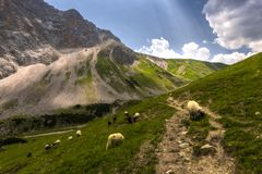 Trail in the austrian alps royalty free stock photos