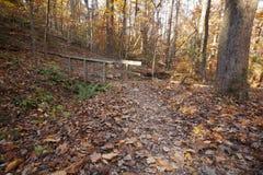 Trail through autumn foliage Stock Photography