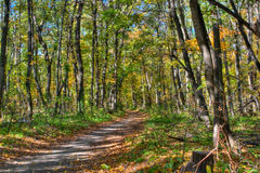 Trail in Autumn Forest Royalty Free Stock Photos