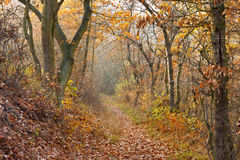 Trail in Autumn Forest Stock Images