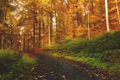 Trail through autumn forest Royalty Free Stock Photo
