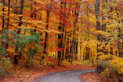 Trail through autumn forest Stock Photo