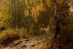 Trail in autumn forest Royalty Free Stock Image