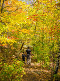 Trail in the autumn forest Stock Photos
