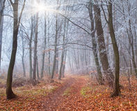 Trail in autumn forest Royalty Free Stock Photo