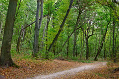 Trail in autumn forest Royalty Free Stock Images