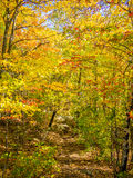 Trail in the autumn forest Royalty Free Stock Photos