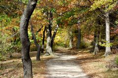 Trail in the autumn forest. Trunks of trees along the trails. Autumn leaves Stock Photography