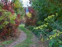 Trail in the autumn forest with yellow and red trees Royalty Free Stock Images