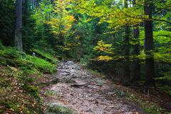 Trail in Autumn Mountain Forest Royalty Free Stock Photo