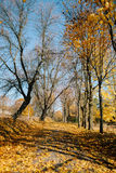Trail in autumn park.fallen leaves Royalty Free Stock Image