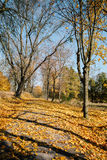 Trail in autumn park.fallen leaves Royalty Free Stock Photo