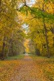 Trail through autumn park. Autumn forest  landscape Stock Image