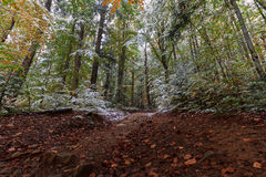 Trail in the autumn woods covered with snow Stock Photos