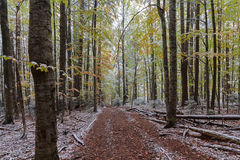 Trail in the autumn woods covered with snow Stock Image