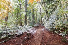 Trail in the autumn woods covered with snow Stock Photography