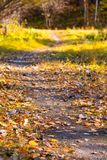 Trail away, autumn forest with fallen foliage royalty free stock photos