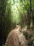 Trail in Bamboo Forest Stock Image