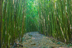 Trail Through Bamboo Forest Stock Photos