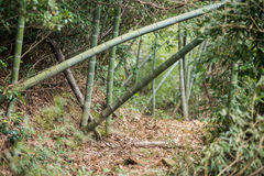 Trail in the Bamboo forest Royalty Free Stock Photos