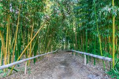 Trail Through Bamboo Forest. A trail through a bamboo forest with a wooden railing Royalty Free Stock Images